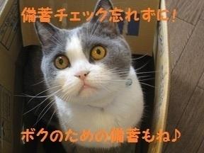 ぼうにゃん (4).jpg