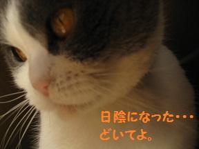 ぼくぼっくう (2).jpg