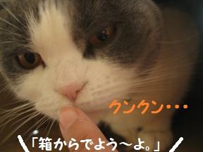 ぼっくすだぁ (3).jpg