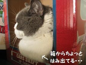 ぼぼぼっ (1).jpg