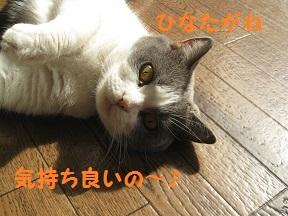 ぽかっ (4).jpg