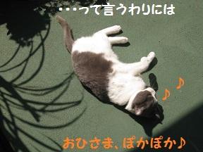 まだあちゅい (4).jpg