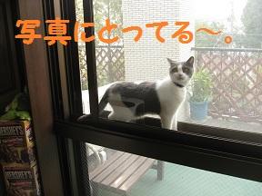 みてたんじゃもどるよ (2).jpg