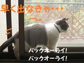 みてたんじゃもどるよ (3).jpg