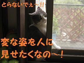 みてたんじゃもどるよ (4).jpg