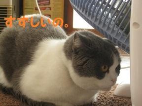 みみけずれ (4).jpg
