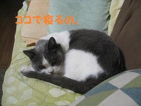 めでる (1).jpg