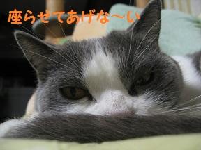 めでる (2).jpg