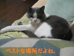 めでる (4).jpg