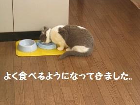 もぎゅもぎゅ (1).jpg
