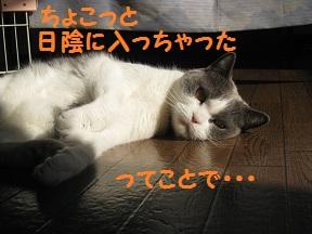 よいしょ1 (3).jpg