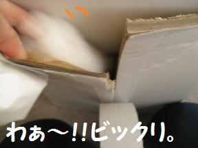 わぁ~びっくり (1).JPG
