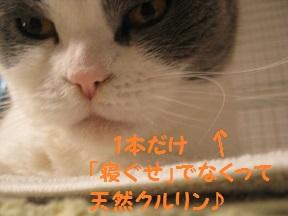 主張 (2).jpg