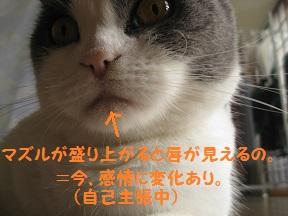 主張 (5).jpg