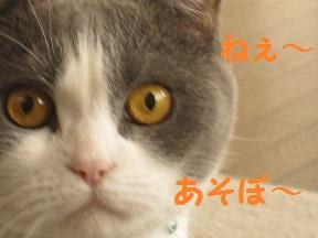 私待つわ (2).jpg