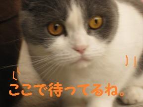 私待つわ (3).jpg
