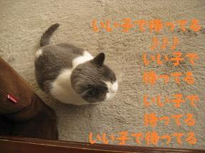 私待つわ (4).jpg