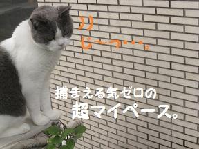 IMG_3426.jpg
