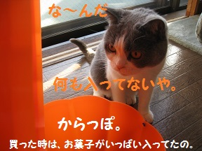 IMG_3671.jpg