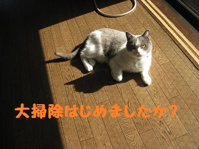 IMG_4132.jpg