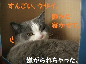 IMG_6087.jpg