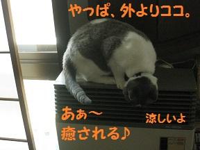 IMG_6170.jpg
