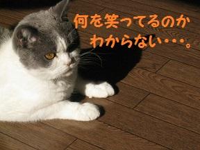 IMG_6833.jpg