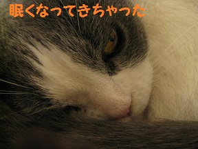 IMG_7117.jpg