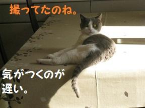 IMG_7163.jpg