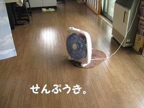 IMG_8927.jpg