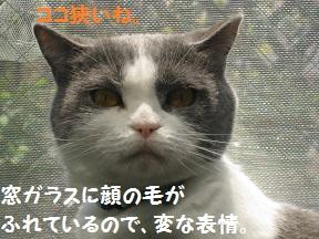 gyu (2).jpg