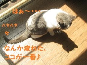 gyu (4).jpg
