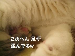 kikire (2).jpg