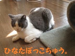 sankaku (1).jpg