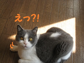 sankaku (3).jpg