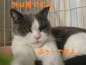 tsumaran (2).jpg