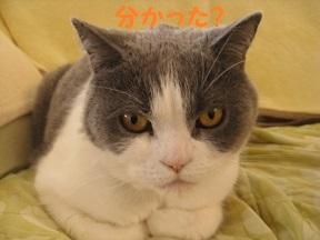 wakaru (4).jpg