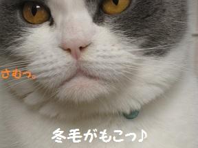 ああさむい (4).jpg