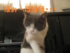 あらやだおくさま (2).jpg