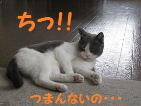 いそがしのよ (3).jpg
