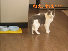 おかわ~り (1).jpg