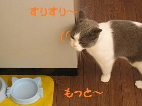 おかわ~り (2).JPG