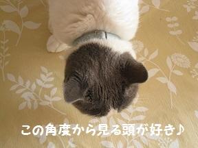 おなおし (1).jpg