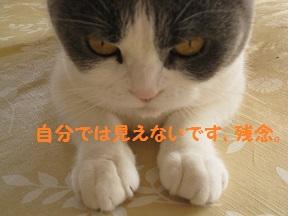 おなおし (2).jpg