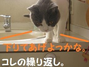 おりよっかな (4).jpg