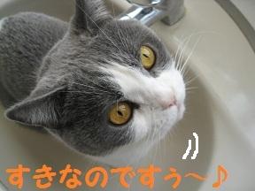 かくれんぼ (2).jpg