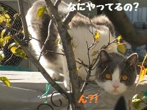 かばああったか (4).jpg