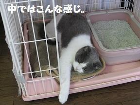 こっちきてね (2).jpg