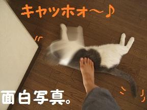 ごろごろ、ぴー(0).jpg