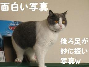 ごろごろ、ぴー(1).jpg